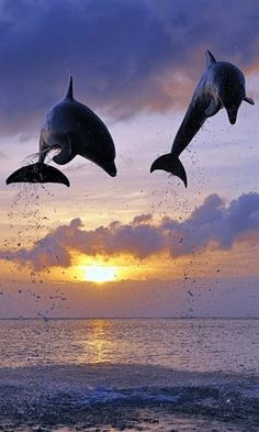 Dolphins Live Wallpaper : 7fon & LWP - Apps on Google Play Aquarium Live Wallpaper, Reptiles, Dolphin Images, End Of Days, Garden Toys, Sea Birds, Logo Images, Live Wallpapers, Stunning View