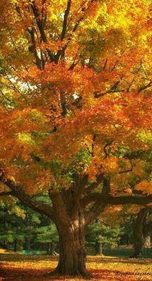 Trees Full Of Life