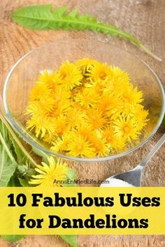 10 Fabulous Uses for Dandelions. Many people call them weeds but dandelions are… Dandelion Uses, Dandelion Recipes, Herbal Remedies, Home Remedies, Natural Remedies, Health Remedies, Wild Edibles, Edible Plants, Medicinal Plants