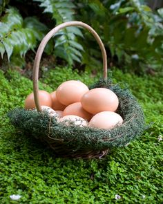 Nutrition information regarding Eggs