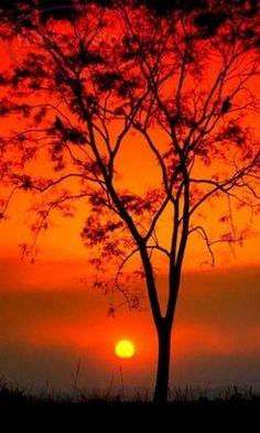 Beautiful Sunset - Red Sky - Android Wallpapers, HTC T-Mobile Wallpapers… Amazing Sunsets, Amazing Nature, Amazing Red, Awesome, Amazing Photography, Nature Photography, Fotografie Hacks, Cool Pictures, Beautiful Pictures