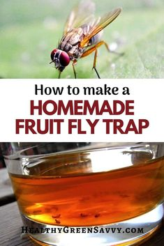 This easy DIY fruit fly trap using simple ingredients from your kitchen will take care of those annoying fruit flies. Homemade Fruit Fly Trap, Diy Fruit Fly Trap, Fruit Fly Traps, Green Cleaning, Cleaning Tips, Gardening Tips, Organic Gardening, Fruit Flies, Natural Lifestyle