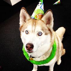 Party animal Raiden!