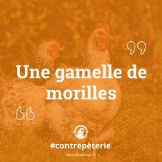 🐔 Une gamelle de morilles #contrepèterie #lapoulequimue #gamelle #morille #mignonne #pourlesenfants Movie Posters, Cute, Film Poster, Billboard, Film Posters
