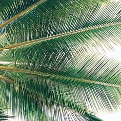 The palm tree that sways in the breeze stays standing the longest. Chillout Zone, Southern California Beaches, Plants Are Friends, Palmiers, Tropical Art, Vacation Resorts, Photo Tree, Color Of Life, Beautiful World