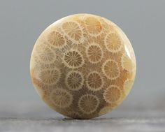 Sharp Patterns, AAA Round Fossils, Ring, Rings Coral Fossil Cabochon 30 x Fossilized Coral, Sgraffito, Fossils, Gems, Rings, Patterns, Minerals, Home Decor, Design