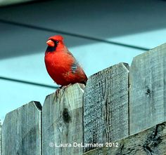 Hello Mr. Cardinal, thank you for visiting.