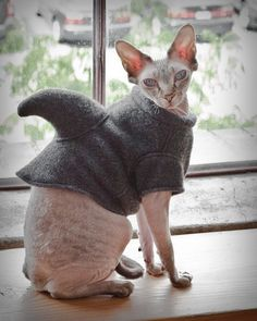 Dude. Our hairless (because your allergic) cats will have to wear shark sweaters to keep their weird little bodies warm.