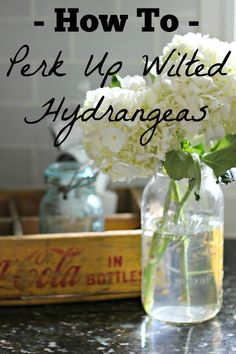 Don't toss wilted hydrangeas! There is still life left in them. Here is a quick tip on how to perk up wilted hydrangeas.
