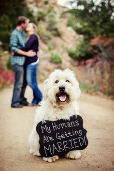 Engagement Photography DIY a chalk sign for your dog to make unique engagement Save the Dates!DIY a chalk sign for your dog to make unique engagement Save the Dates! Dog Engagement Pictures, Engagement Signs, Unique Engagement Photos, Engagement Photo Poses, Engagement Photography, Winter Engagement, Photography Photos, Engagement Shoots, Wedding Pictures