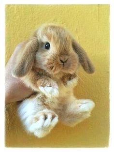 Little baby bunny! Little baby bunny! Cute Baby Bunnies, Cute Baby Animals, Animals And Pets, Funny Animals, Funny Pets, Bunny Bunny, Funny Bunnies, Bunny Fufu, Fluffy Bunny