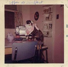 Photo Vintage, Vintage Dog, Vintage Photographs, Vintage Photos, Polaroid Pictures, Polaroids, People Having Fun, Vintage Polaroid, Thats The Way