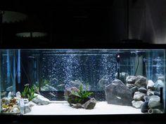 75 gallon Tanganyikan cichlid aquarium fish tank #trustefish