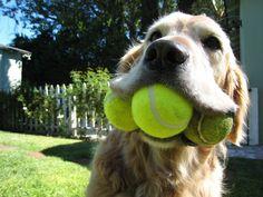 Saiba como socorrer um cachorro que está engasgando e aprenda a salvar a vida do seu cão com dicas simples.