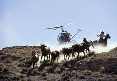 wild horse roundup starts today. how a culture treats its animals says everything