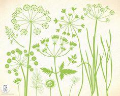 Wildkräuter, Wildblumen, Pflanzen, Flora, Silhouette, Vektor-Cliparts…
