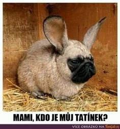 hybrid pug face with rabbit hybrid pud with gorilla hybrid pug with a Boheme hybrid husky hybrid dog . Cat Memes, Funny Memes, Hilarious, Photoshopped Animals, Animal Mashups, Funny Animals, Cute Animals, Funny Emoticons, Emoticons Text