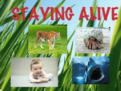 In 'Staying Alive', another learning game by Helen Smith, kids will learn how to care for living things.