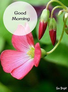 Good Morning... Sweet Good Morning Images, Good Morning Picture, Good Morning Flowers, Good Morning Good Night, Morning Pictures, Morning Msg, Good Morning Texts, Good Morning Messages, Good Morning Wishes