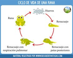 Activity Sheets For Kids, Activities For Kids, Spanish Lessons, Life Cycles, Grade 1, Science, How To Plan, Learning, Creative