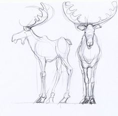 On the fourth day of Christmas we draw Moose!  Four calling moose to be exact.  Drawing the moose is no different from the caribou, only moo...