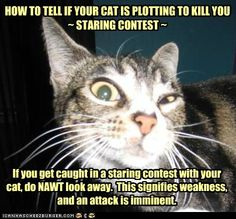 How to tell if yout cat is plotting to kill you  ~ Staring Contest ~