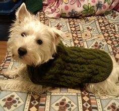 Free Pattern: 102-43 Knitted dogcoat