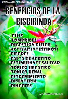 BENEFICIOS DE LA BISBIRINDA