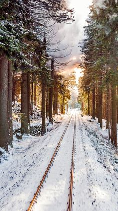 Snow Scenes, Winter Scenes, Essayist, Train Tour, Winter Pictures, Travel Pictures, The Great Outdoors, Places To Go, Scenery