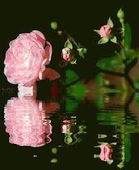 Por Rosas, Gifs Flores, Gifs Animados, Resultado, Imagen, Gif Brilla Flores, Flores Flores Mezcla, Mariposa S Flores Gif, Hermosas Flores