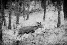 Blue Cheeze Photography: A Trip to Ruidoso! #ruidoso #wildlife #photography #scenic #newmexico