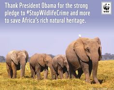 President Obama Pledges Support to Stop Wildlife Crime in Africa | Flickr - Photo Sharing!
