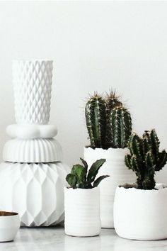 www.mypersonalexperience.net Cactus Cacti Curacao Interior Indoor plants succulents
