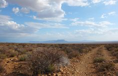 Tankwa Karoo National Park, after the storm | One Footprint On The World