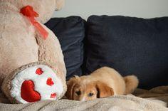 Wife had a photo shoot new puppy, meet Choko 2