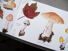 Ideas for nature Journal. The colours are perfect you've really captured the fungi's tones. Artist Journal, Artist Sketchbook, Art Journal Pages, Art Journals, Botanical Art, Botanical Illustration, Illustration Art, Botanical Drawings, Autumn Doodles