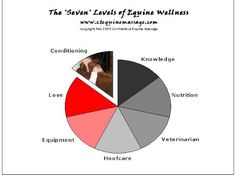 The 7 Levels of Equine Wellness