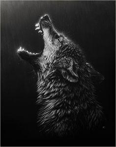 """""""Desperation"""" Wolf Scratchboard & Airbrush, 16x20 by Cristina Penescu"""
