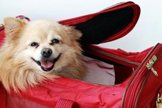Traveling with pets can seem like a circus, but knowing what to expect and being prepared well ahead of your flight will make for a smooth trip for both you and your non-human companion.