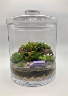 Terrario de musgo vivo en bote de cristal de diámetro 20 cm de base y 25 cm de altura con tapa. Todos los productos utilizados son naturales , salvo los muñecos. Tapas, Natural, Home Decor, Moss Terrarium, Terrariums, Glass Boat, Mini Gardens, Canisters, Products