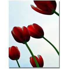 Trademark Fine Art Red Tulips from the Bottom Up Canvas Art by Michelle Calkins, Size: 18 x 24, Multicolor