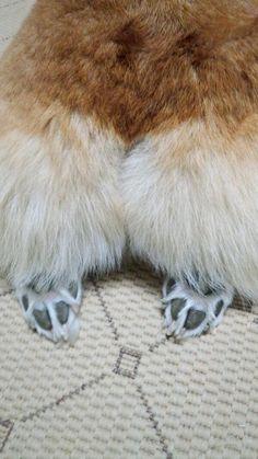 fluffy corgi pants