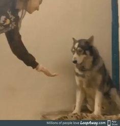 Shake my hand