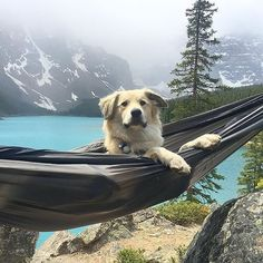 """""""Dogs are not our whole life, but they make our lives whole."""" -Roger Caras : @whitwhitehouse : Moraine Lake"""