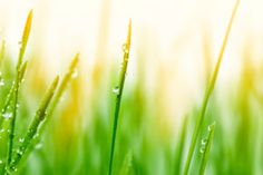5 Ways You Can Predict the Weather   http://www.farmersalmanac.com/weather/2010/07/06/5-ways-you-can-predict-the-weather/
