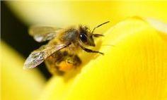 Σαπούνι Mασσαλίας:για τα τσιμπήματα μέλισσας