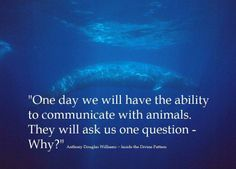 """""""One day we will have the ability to communicate with animals. They will ask us one question - Why?"""""""