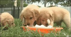 Puppies can cure depression