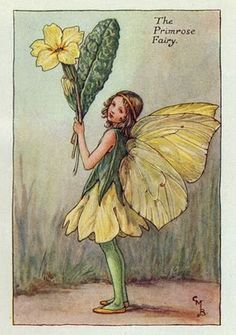 Illustration for the Primrose Fairy from Flower Fairies of the Spring. A girl fairy stands facing left holding a bunch of primroses.- Cicely Mary Barker FF Spring 10 1923 Cicely Mary Barker, Flower Fairies, Vintage Fairies, Vintage Flowers, Vintage Art, Vintage Children's Books, Art Flowers, Vintage Paper, Fantasy Magic