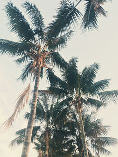 palms / photo by Joanna Andrews
